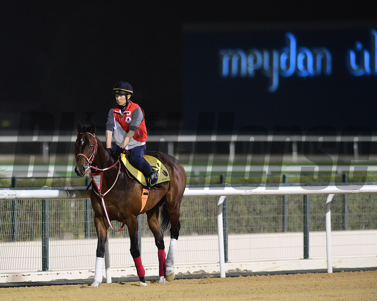 Dubai World Cup -Morning works 3/22/17, photo by Mathea Kelley/Dubai Racing Club<br /> Real Steel, Dubai Turf