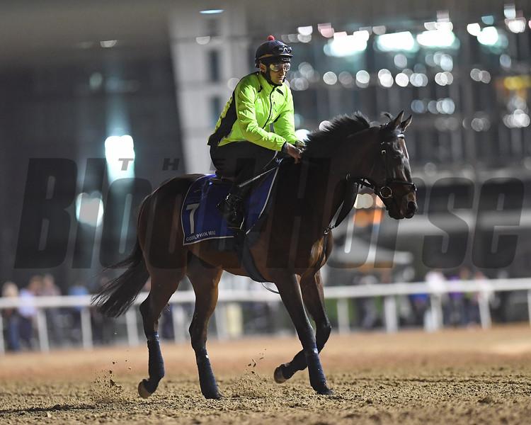 Dubai World Cup -Morning works 3/24/17, photo by Mathea Kelley/Dubai Racing Club<br /> Gifted Master, Godolphin Mile