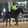 Dubai World Cup -Morning works 3/24/17, photo by Mathea Kelley/Dubai Racing Club<br /> Gifted Master, Godolphin Mile