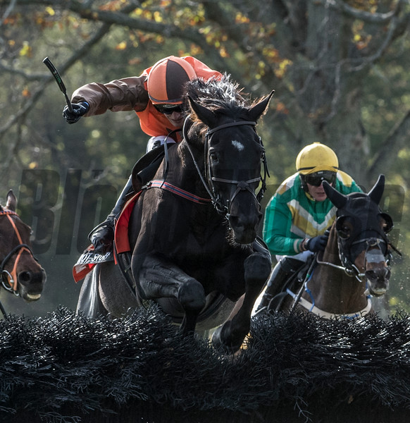 Jockey Danny Mullins guides Mr.Hot Stuff over the final fence to win the Grand National Steeplechase race at Far Hills Race Course  Oct. 21, 2017 in Far Hills, N.J.  Photo by Skip Dickstein