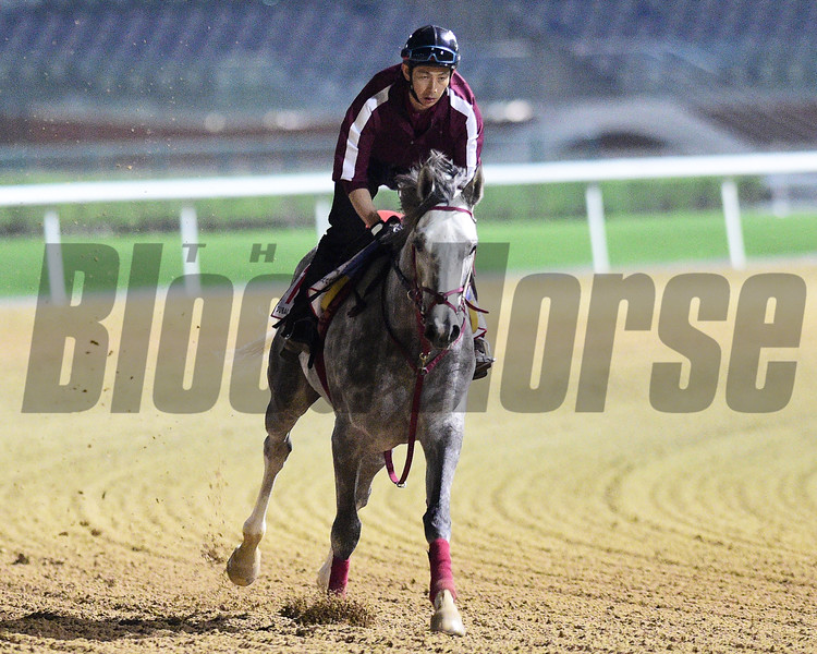 Dubai World Cup -Morning works 3/22/17, photo by Mathea Kelley/Dubai Racing Club<br /> Lani, Dubai World Cup