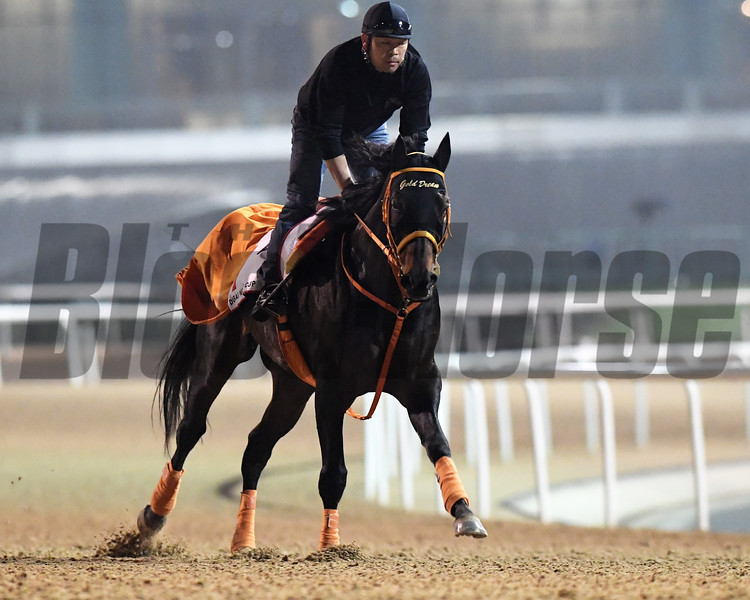 Dubai World Cup -Morning works 3/22/17, photo by Mathea Kelley/Dubai Racing Club<br /> Gold Dream, Dubai World Cup