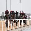 Dubai World Cup -Morning works 3/24/17, photo by Mathea Kelley/Dubai Racing Club  Irish Trained Horses