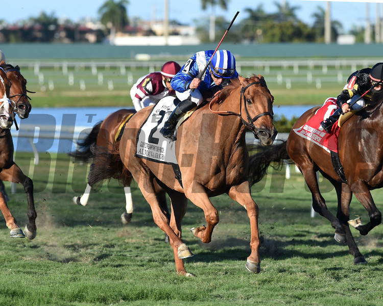 Almanaar wins the 2017 Gulfstream Park Turf Handicap<br /> Coglianese Photos/Lauren King