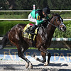 Quijote wins the 2017 Millions Sprint Preview Stakes<br /> Coglianese Photos