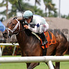 Made You Look wins the 2017 Dania Beach Stakes<br /> Coglianese Photos/Kenny Martin