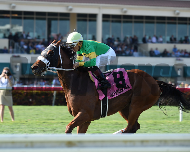 Pretty Perfection wins the 2017 Ladies' Turf Sprint Stakes<br /> Coglianese Photos/Lauren King