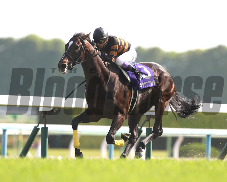 Kitasan Black wins the Tenno Sho Spring (G1) at Kyoto on April 30 2017