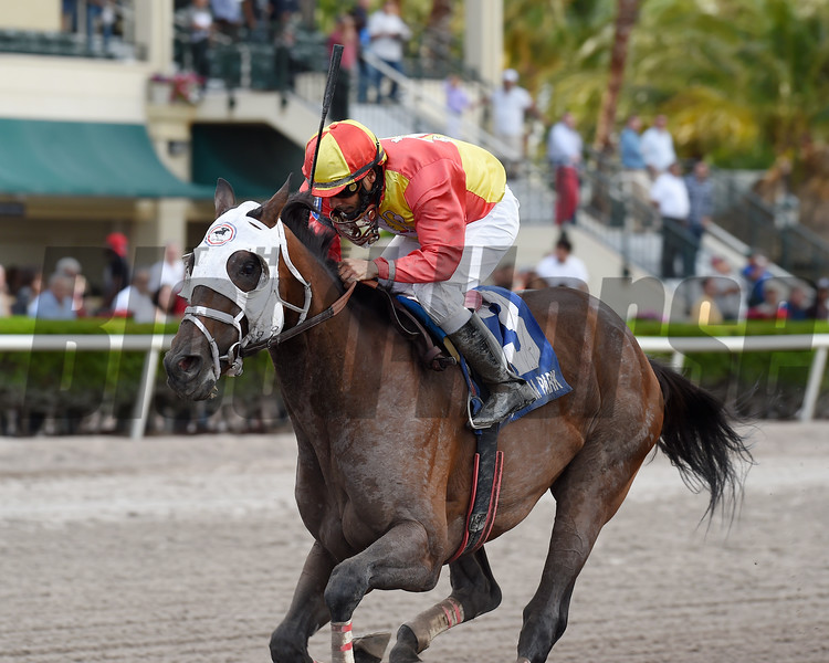 Fear the Cowboy wins the Skip Away Stakes (G3) at Gulfstream Park on March 25, 2017