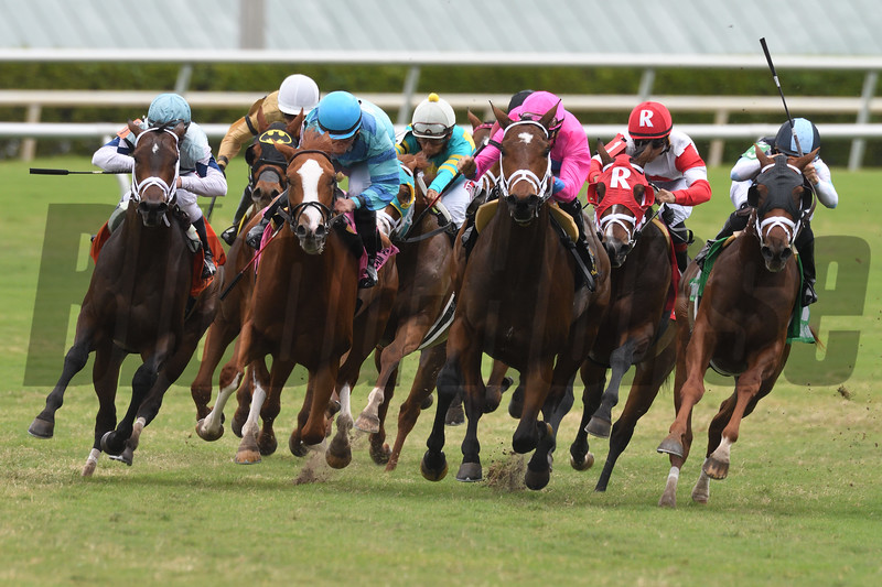 Made You Look wins the 2017 Dania Beach Stakes<br /> Coglianese Photos/Andie Biancone