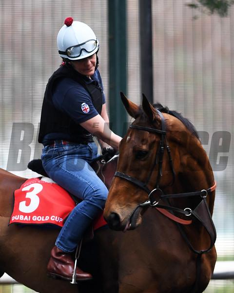 Dubai World Cup -Morning works 3/23/17, photo by Mathea Kelley/Dubai Racing Club<br /> Big Orange, Dubai Gold Cup