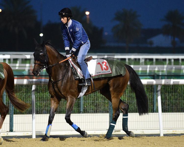 Dubai World Cup -Morning works 3/22/17, photo by Mathea Kelley/Dubai Racing Club<br /> Furia Cruzada, Dubai World Cup