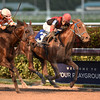 Hy Riverside wins the 2017 Sunshine Millions Classic<br /> Coglianese Photos