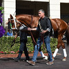 Noble Bird - Gulfstream Park - January 26, 2017<br /> Coglianese Photos/Leslie Martin