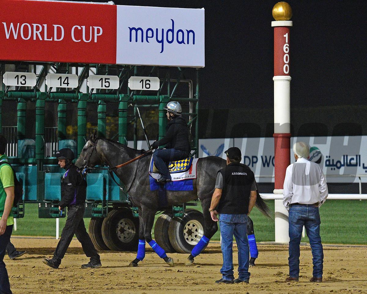Dubai World Cup -Morning works 3/24/17, photo by Mathea Kelley/Dubai Racing Club<br /> Arrogate, Bob Baffert, Jimmy Barnes, Dubai World Cup