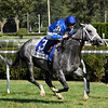 Zennor wins the 2017 Fasig-Tipton Lure Stakes<br /> Coglianese Photos/Robert Mauhar