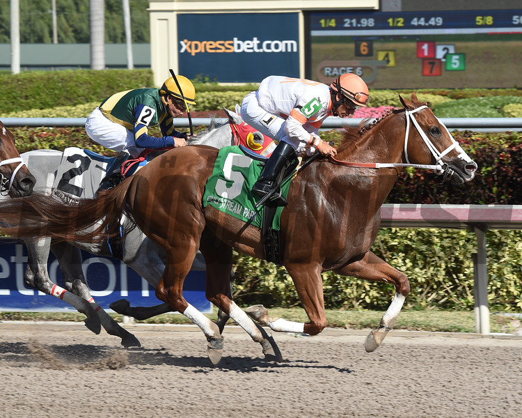 Early Entry wins the 2017 Sunshine Millions Sprint Stakes<br /> Coglianese Photos/Leslie Martin