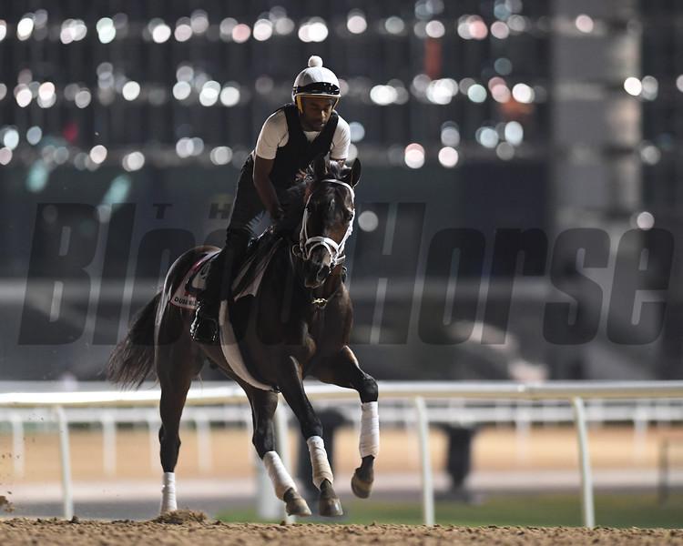 Dubai World Cup -Morning works 3/24/17, photo by Mathea Kelley/Dubai Racing Club<br /> Neolithic , Dubai World Cup