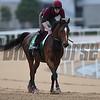 Dubai World Cup -Morning works 3/24/17, photo by Mathea Kelley/Dubai Racing Club<br /> Highland Reel, Dubai Sheema Classic