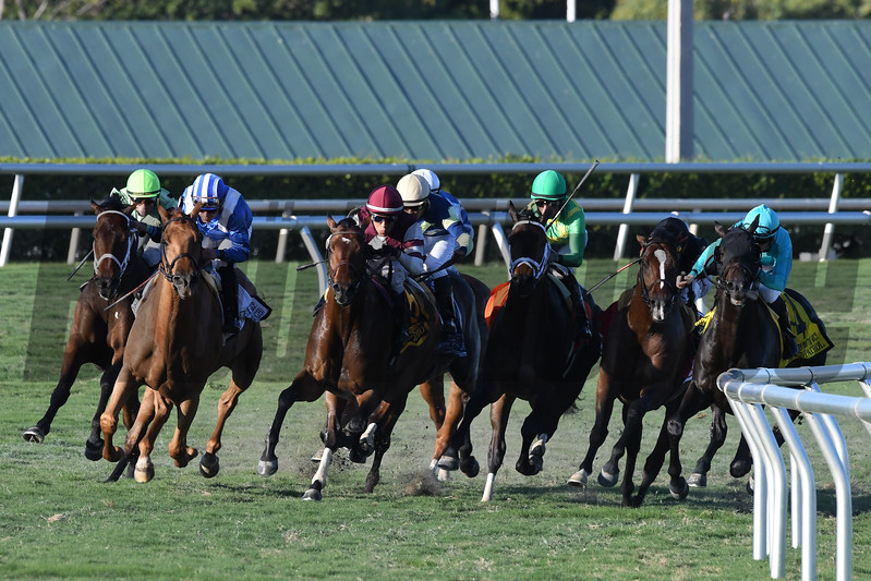 Almanaar wins the 2017 Gulfstream Park Turf Handicap<br /> Coglianese Photos/Andie Biancone