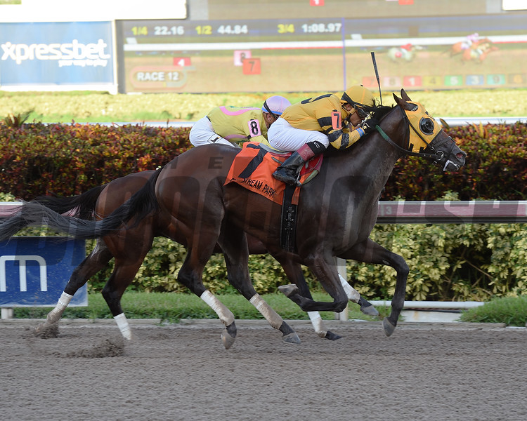 Soutache wins the 2017 FTBOA Florida Sire Affirmed Stakes<br /> Coglianese Photos/Leslie Martin
