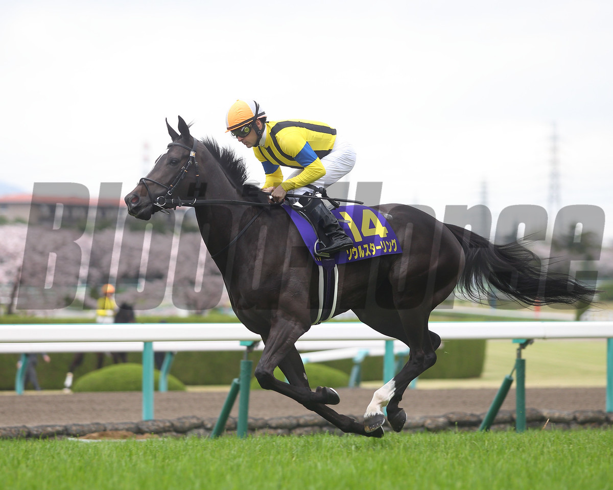 Soul Stirring finished third in the Oka Sho (G1) at Hanshin Racecourse on April 9 2017