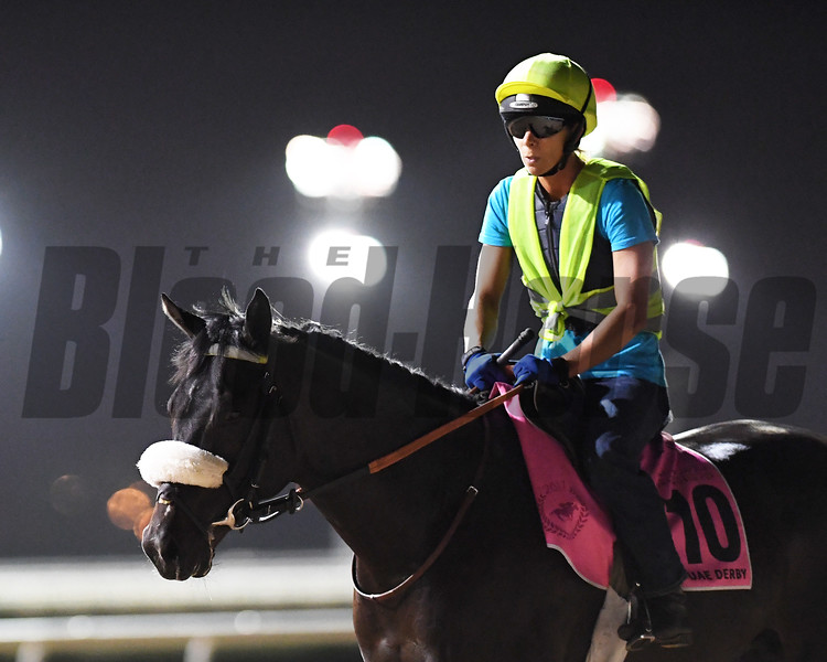 Dubai World Cup -Morning works 3/24/17, photo by Mathea Kelley/Dubai Racing Club<br /> Qatar Man, UAE Derby