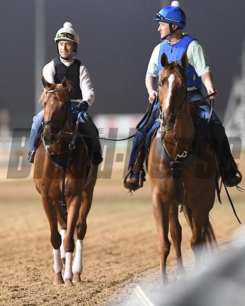 Dubai World Cup -Morning works 3/24/17, photo by Mathea Kelley/Dubai Racing Club<br /> Gun Runner, Dubai World Cup
