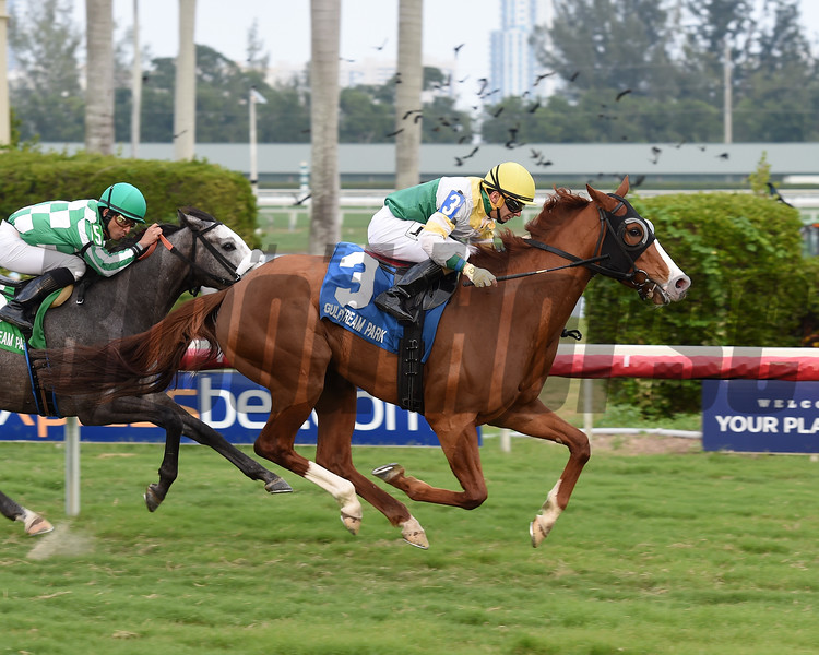 Ghostly Presence wins the 2017 Tropical Park Oaks - Division Two<br /> Coglianese Photos/Leslie Martin