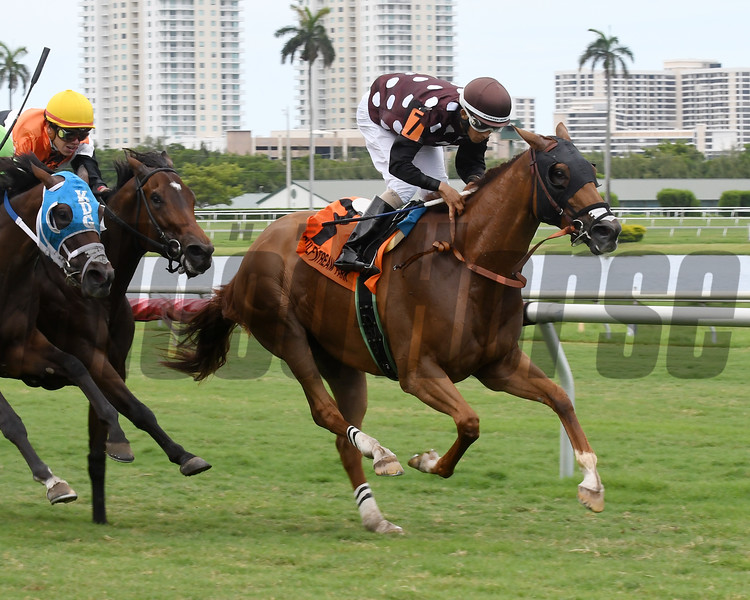 Somethingelse wins the 2017 Ginger Punch Stakes<br /> Coglianese Photos/Lauren King