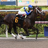 Greenpointcrusader - AOC, Gulfstream Park, January 27, 2017<br /> Coglianese Photos/Annette Jasko