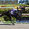 Final Flurry - Maiden Win, Gulfstream Park, December 10, 2017<br /> Coglianese Photos/Leslie Martin