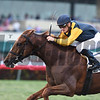 Sadler's Joy wins the 2017 Pan American<br /> Coglianese Photos/Lauren King