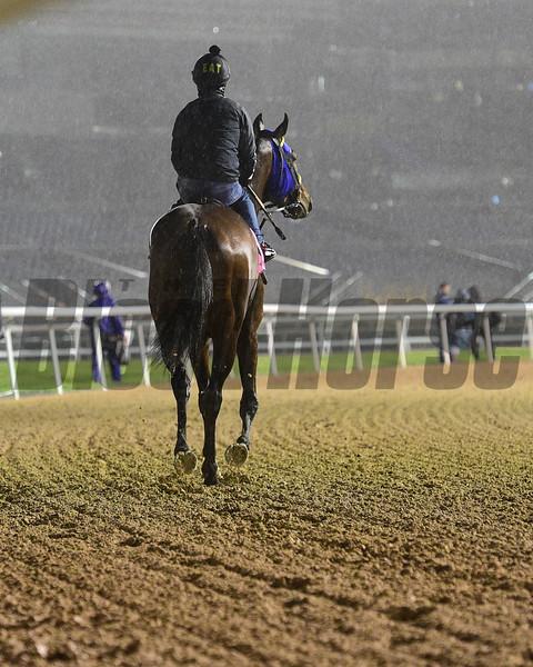 Dubai World Cup -Morning works 3/22/17, photo by Mathea Kelley/Dubai Racing Club<br /> Meydan Scenic