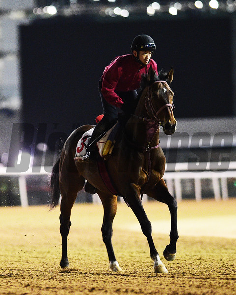 Dubai World Cup -Morning works 3/24/17, photo by Mathea Kelley/Dubai Racing Club<br /> Awardee Dubai World Cup