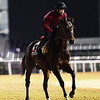 Dubai World Cup -Morning works 3/24/17, photo by Mathea Kelley/Dubai Racing Club<br /> Awardee Dubai World Cup