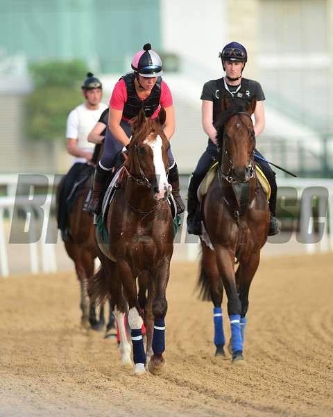 Dubai World Cup -Morning works 3/22/17, photo by Mathea Kelley/Dubai Racing Club<br /> French Trained Horses