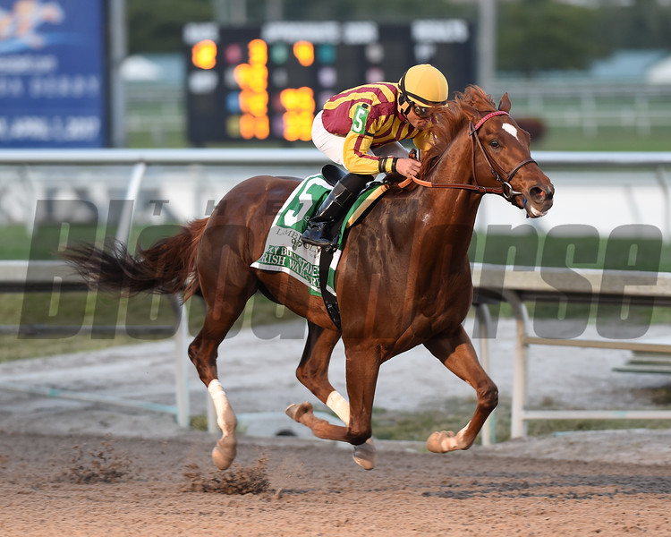 Irish War Cry wins the 2017 Holy Bull<br /> Coglianese Photos