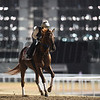 Dubai World Cup -Morning works 3/24/17, photo by Mathea Kelley/Dubai Racing Club<br /> Gun Runner, Dubai World Cup