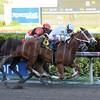 Distinta wins the 2017 Inside Information Stakes<br /> Coglianese Photos/Leslie Martin