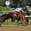Verve's Tale wins the 2017 Summer Colony Stakes<br /> Coglianese Photos