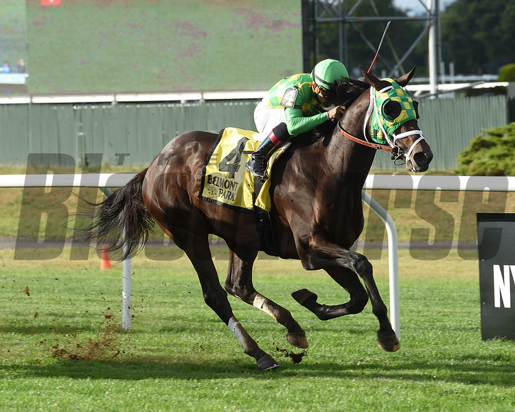Seabhac wins the 2017 Pilgrim<br /> Coglianese Photos