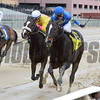 Alex the Terror wins the 2017 Caixa Eletronica Stakes<br />  Coglianese Photos/Joe Labozzetta