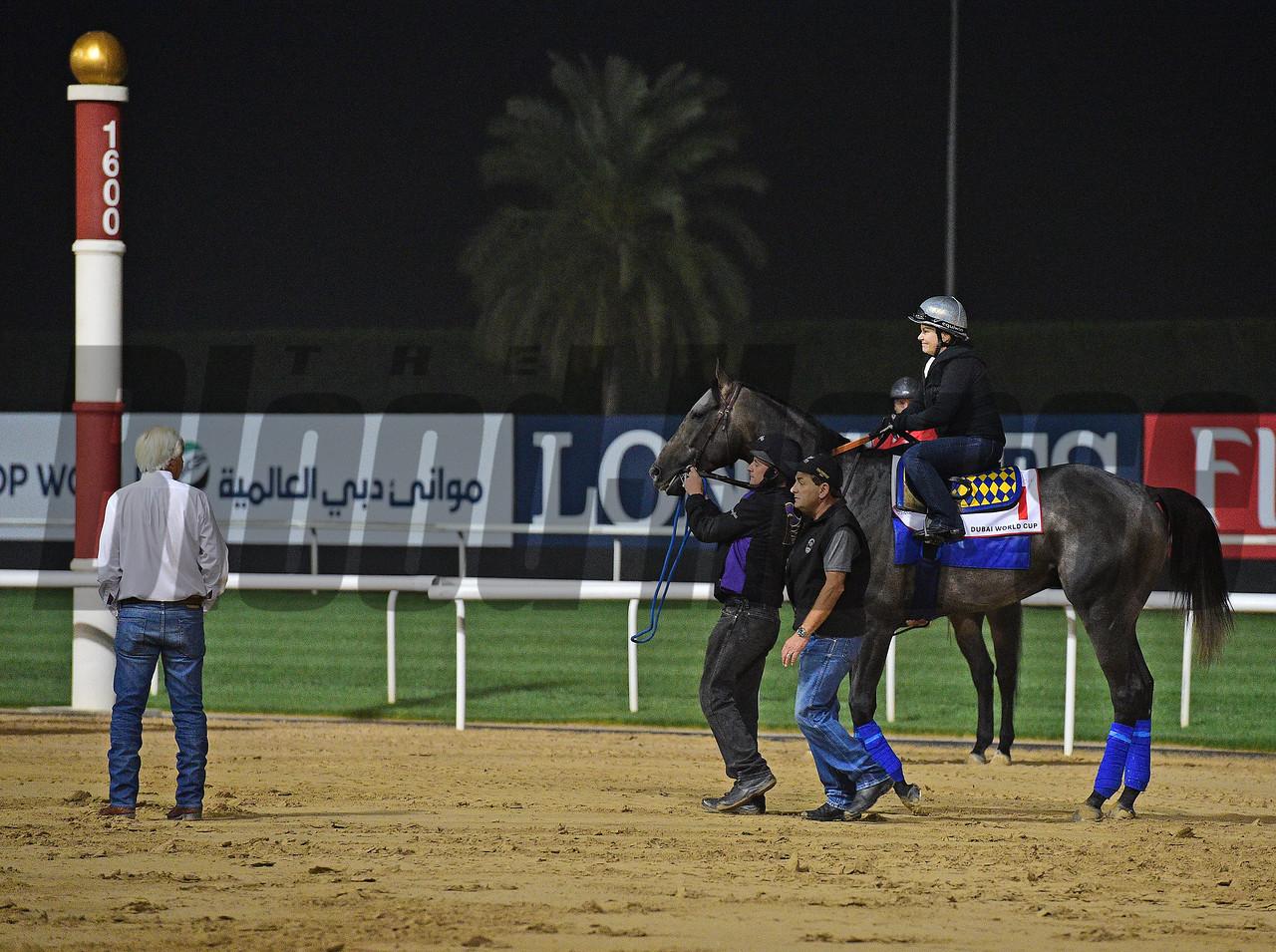 Dubai World Cup -Morning works 3/24/17, photo by Mathea Kelley/Dubai Racing Club Arrogate, Bob Baffert, Dubai World Cup