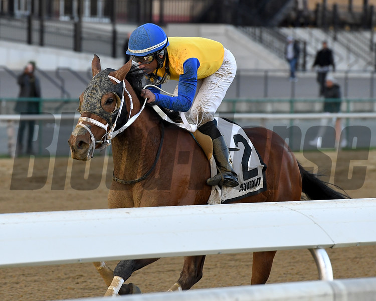 Bee Noteworthy wins the New York Stallion Series Stakes at Aqueduct Racectrack on November 12, 2017.<br /> Coglianese Photos/Joe Labozzetta