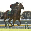 Boom Time - 2017 Japan Cup Preparations<br /> November 24, 2017<br /> Katsumi Saito