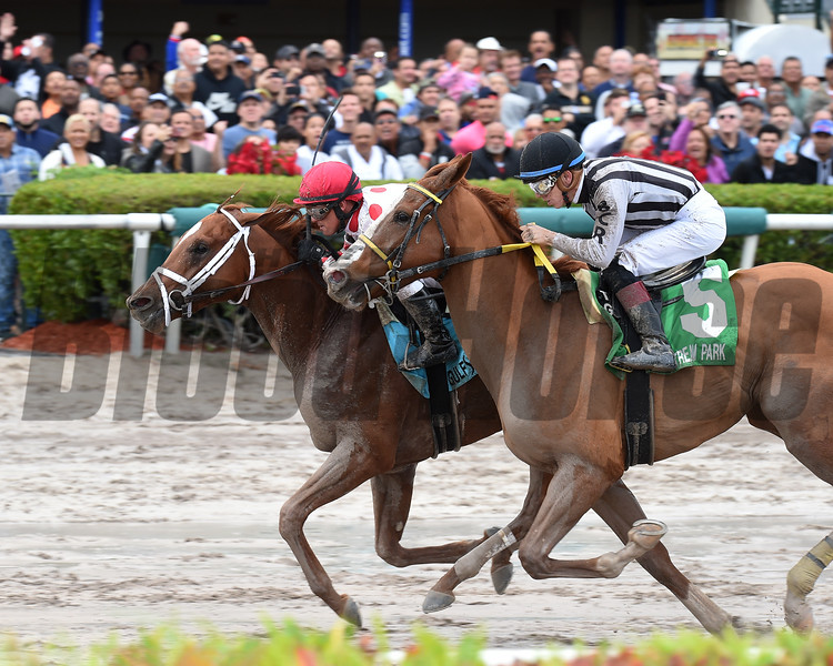 Bal Harbour wins the 2017 Smooth Air Stakes<br /> Coglianese Photos/Lauren King