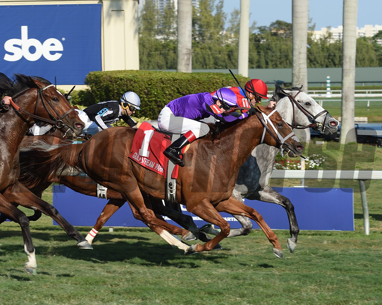 Power Alert wins the 2017 Gulfstream Park Turf Sprint Stakes<br /> Coglianese Photos/Leslie Martin