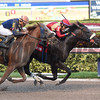 Unified wins the 2017 Gulfstream Park Sprint <br /> Coglianese Photos/Leslie Martin