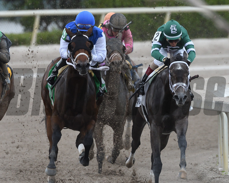 Wildcat Kate wins the 2017 Old Hat Stakes<br /> Coglianese Photos/Andie Biancone